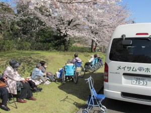 ぼうさいの丘公園で満開の桜を満喫しました